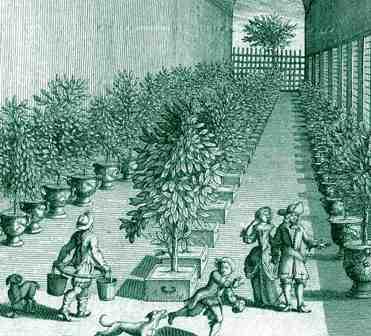 Orangery interior, c. 1700