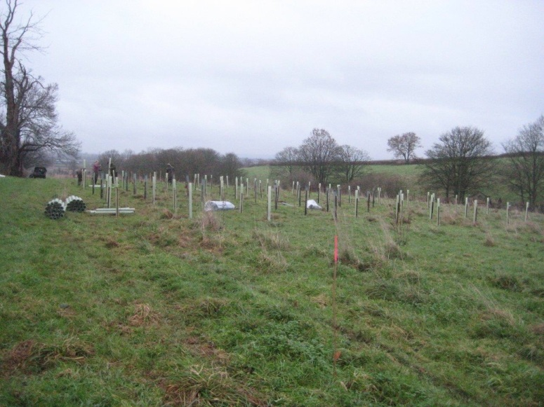 Securing the newly planted small trees from hungry wildlife with the addition of thousands of tree guards.