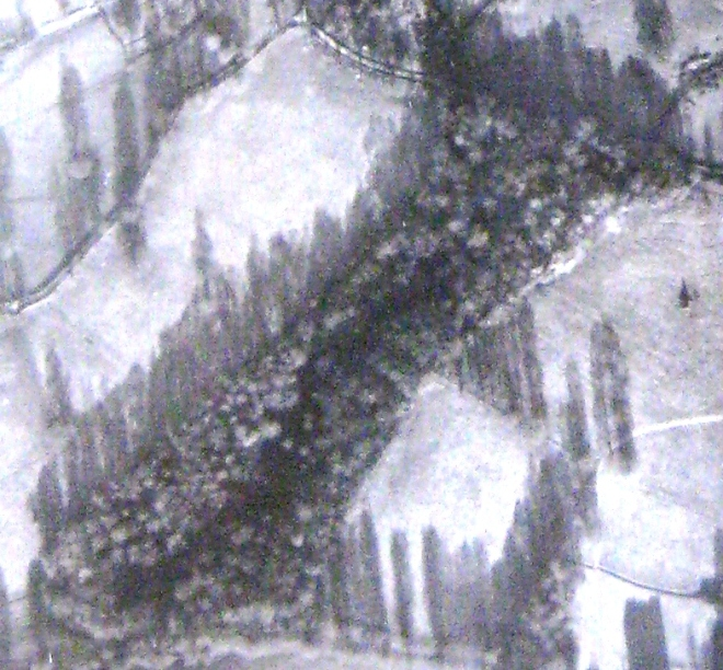 Mill Wood in 1944; fully populated with mature trees as intended.