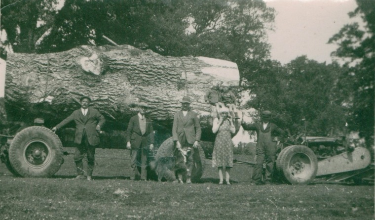 A portion of an ancient tree being carted away after the clear-felling of Mill Wood. In post-war Britain, after the break-up of the estate in 1950, the timber was by far the most valuable asset of the estate, the sale details record that the trees were sold for many multiples of the value of the house and parkland.